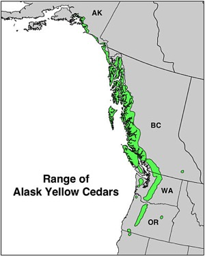 Range map of Alaska cedars