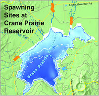 Map of Spawning Sites at Crane Prairie