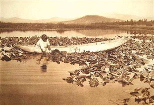 Woman in Boat Gathering Wocus Seeds