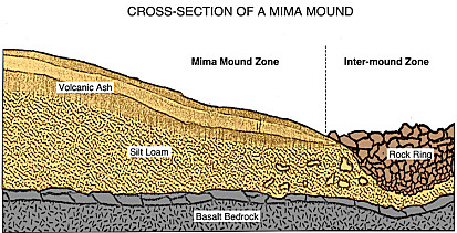 Cross-Section Diagram of a Mima Mound