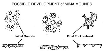 Diagram of Possible Mima Mound Development